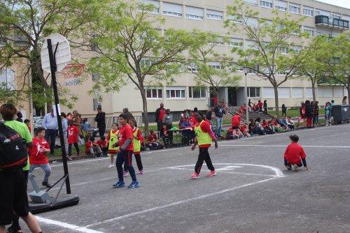 Begon Basket Show